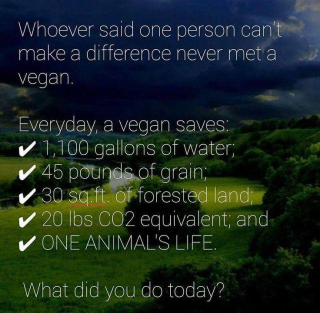218f6cb9bcacb054a5a2fbadee7ffd0e--vegan-foods-go-vegan