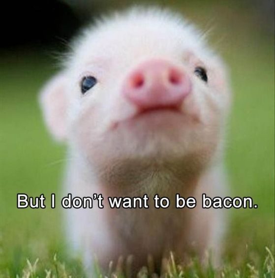 56c0c978532358b2df0119bff4dd214e--cute-animals-quotes-funny-animals-pictures