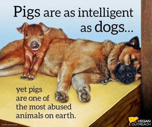 6cec888cb5469f2511eab8b004d9820a--go-vegan-vegan-life